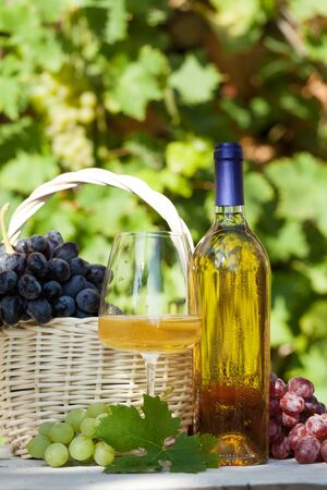 Various grapes in basket, white wine bottle and glass. Autumn vineyard harvest