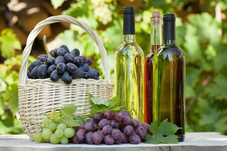 Various grapes in basket, white wine bottles and glass. Autumn vineyard harvest