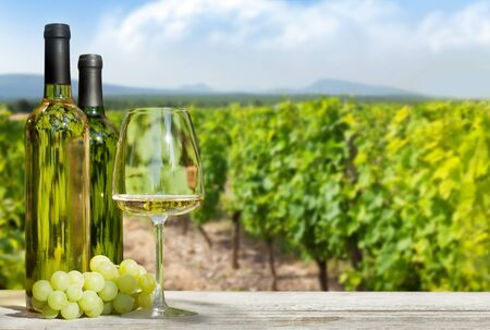 Colorful grapes in basket, white wine bottles and glass in front of landscape of vineyard. French countryside valley 写真素材