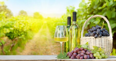 Colorful grapes in basket, white wine bottles and glass in front of landscape of vineyard. French countryside valley Reklamní fotografie