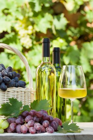 Colorful grapes in basket, white wine bottles and glass. Autumn vineyard harvest 免版税图像