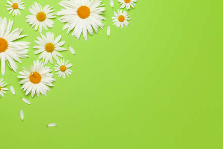 Chamomile flowers frame over green background. Floral greeting card. Top view flat lay with copy space