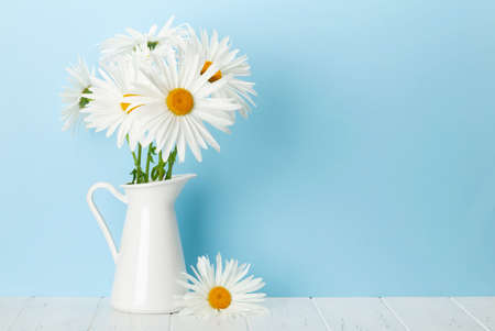 Chamomile flowers bouquet in front of blue wall. Greeting card with copy space