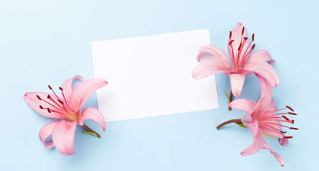 Pink lily flowers over blue background and blank greeting card. Top view flat lay with copy space