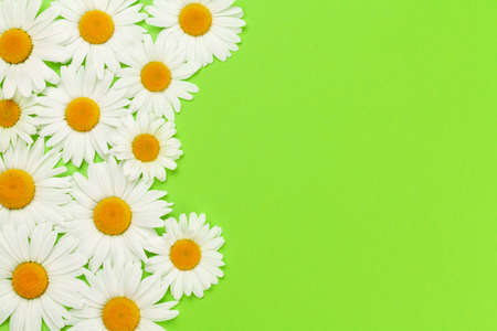 Camomile flower greeting card backdrop over green background. Flat lay with copy space Foto de archivo - 151339999