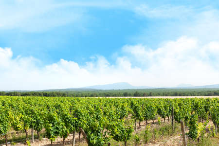 Landscape of vineyard. Sunny summer day. French countryside valley