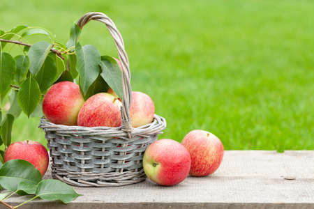 Ripe garden apple fruits in basket on wooden outdoor table with copy space Stockfoto