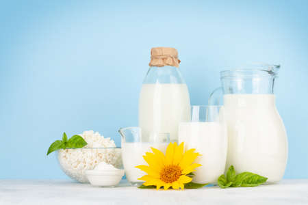Various dairy products. Milk, cheese, cottage, sour cream. In front of blue background with copy space