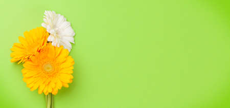 Colorful gerbera flowers over green background. Top view flat lay with copy space Imagens - 162298925