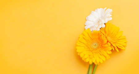 Colorful gerbera flowers over yellow background. Top view flat lay with copy space Imagens - 162298945