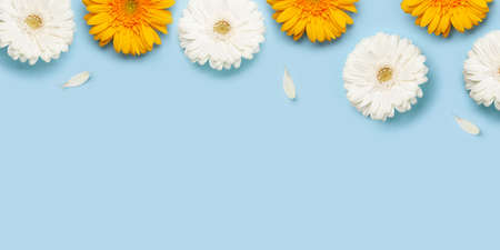 Colorful gerbera flowers and petals over blue background. Top view flat lay with copy space Imagens - 162298950