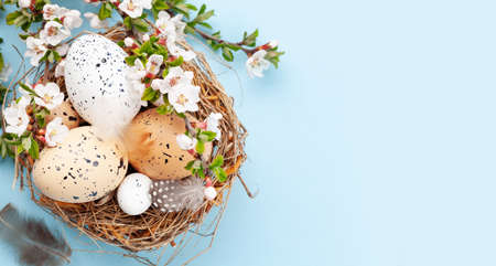 Easter eggs in nest and cherry blossom over blue. Spring greeting card with copy space. Top view flat lay