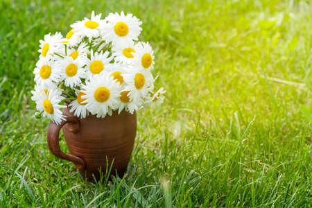 Wild chamomile bouquet on summer grass lawn. With copy space Standard-Bild