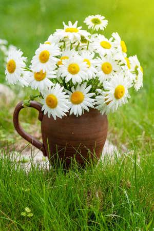Wild chamomile bouquet on summer grass lawn Standard-Bild