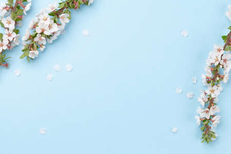 Cherry blossom over blue background. Spring backdrop with sakura branch for greeting card or food menu. Top view flat lay with copy space