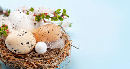 Easter eggs in nest and cherry blossom. Chicken and quail eggs. Spring greeting card with copy space