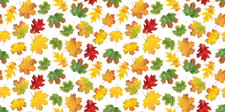 Autumn leaves seamless pattern. Colorful fall maple leaves isolated on white flat background texture