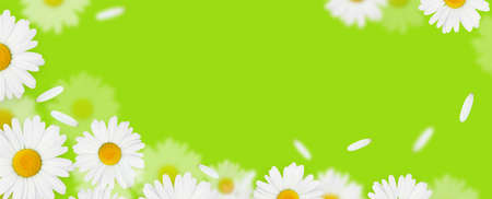 Daisy camomile flowers on green background with copy space Standard-Bild