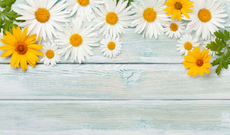 Chamomile flowers background. Garden camomile over wooden backdrop. Top view flat lay with copy space Standard-Bild