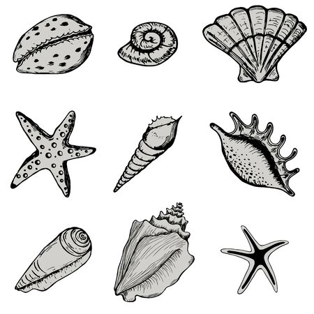 Set sea shell. Collections marine vector illustrations. Isolated on white background. Ocean fauna aquatic underwater.