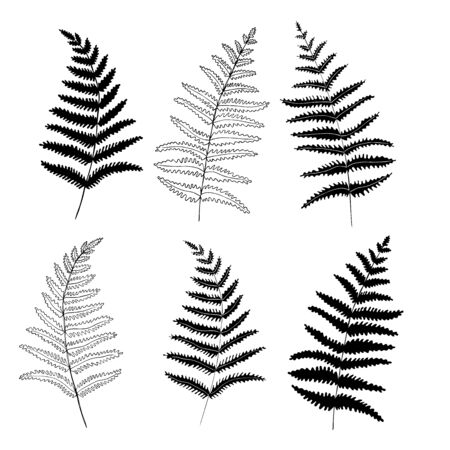 Set graphic collection of fern branches. Coloring book page design, elements for home decor and textile. 向量圖像