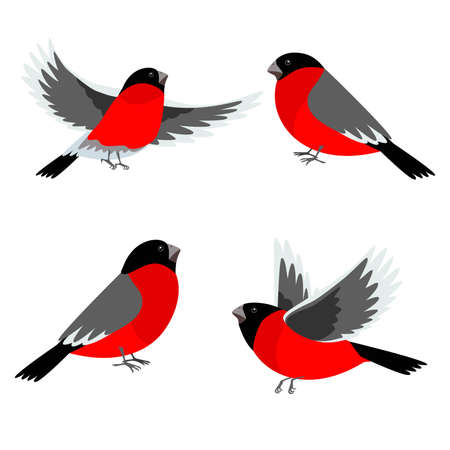 Set of bullfinch birds. Vector illustration for Christmas and New Year's greeting cards, invitations, media banners, printed material design. Vektorové ilustrace