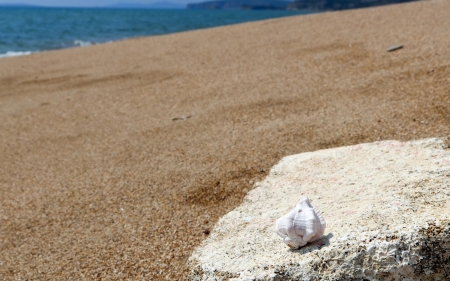 peloponnise: Sea shell resting upon a rock Stock Photo
