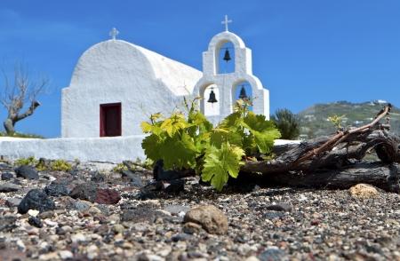Grape field at Santorini island in Greece  Stock Photo
