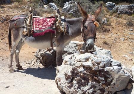 Donkey resting at Crete island in Greece Stock Photo