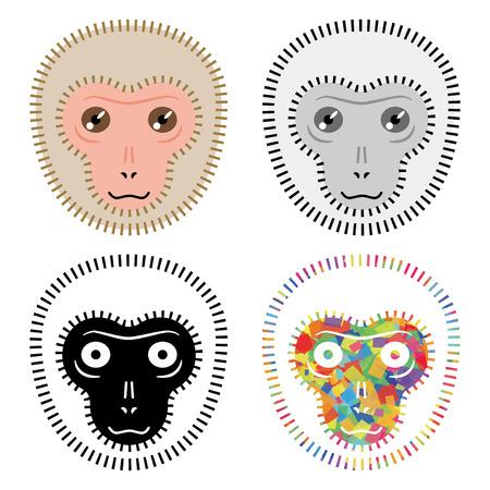 monkey face: Face of the monkey