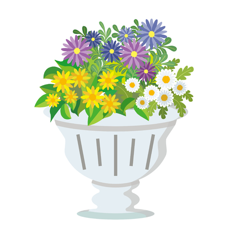 potted flowers (African-daisy and Gold-medallion-flower and Mini-marguerite)