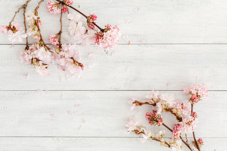 Kirschblüte Hintergrund Standard-Bild - 50841011