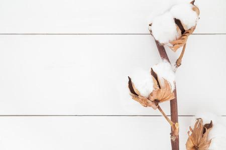 Cotton flower background