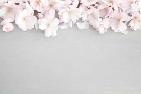 Floral Frühjahr Hintergrund Standard-Bild - 74967131