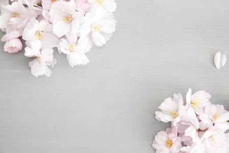 Heller Hintergrund mit Kirschblüten Standard-Bild - 74967127