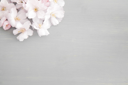 Cherry blossoms on gray background 写真素材