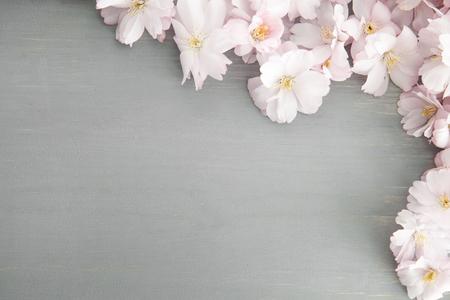 파스텔 벚꽃 배경