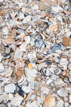Sea Shell Hintergrund Standard-Bild - 78065995