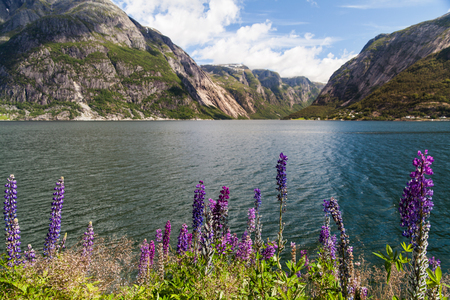Blick über den Eidfjord in Norwegen Standard-Bild - 82717920