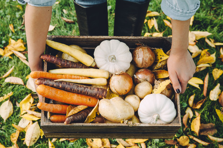 Autumn vegetables in the box 写真素材