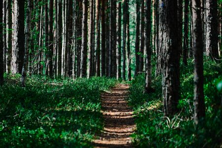 Hiking trail in Koli National Park, Finland.