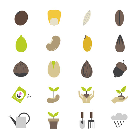 macadamia: Seeds and Gardening Flat Color Icons