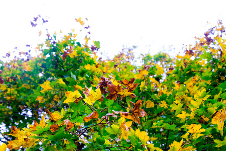 colorful autumn foliage with bright sky Stock Photo