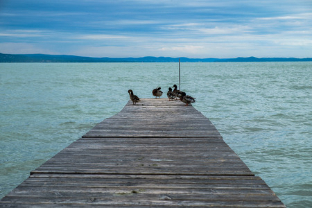 mallards on wooden dock or pier at Balaton lake - cold and cloudy day in the summer, blue hills in background Standard-Bild