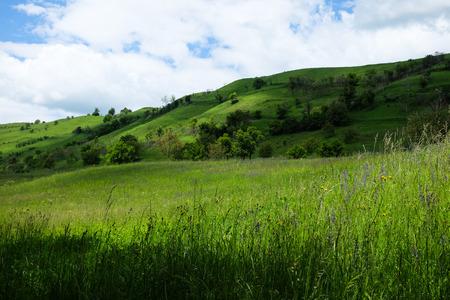 동부 유럽 풍경 -Transylvania 지역, 녹색 초원 및 그늘진 언덕 야생 꽃, 관목, 덤 불, 나무와 푸른 하늘 흰 구름과 봄 스톡 콘텐츠