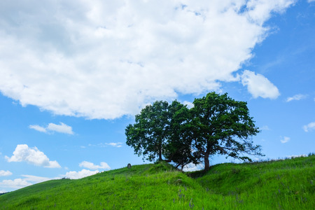 East European scenery - Transylvania region / lights and shadows, green meadow and hill top with two old oak trees and a lonely tombstone and blue sky white clouds in the spring