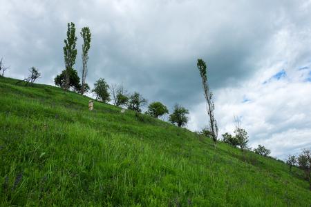 동부 유럽 풍경 -Transylvania 지역, 녹색 초원 및 힐 슬로프 나무와 봄에서 흐린 스톡 콘텐츠