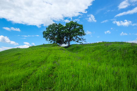 East European scenery - Transylvania region / lights and shadows, wheel tracks in green meadow and hill top with two old oak trees and a lonely tombstone and blue sky white clouds in the spring