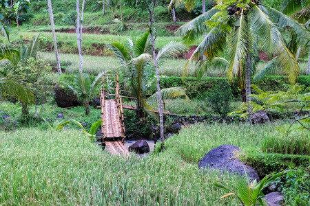 bamboo bridge over tropical river with paddy fields palm trees and rocks