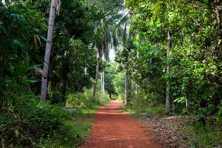 Red dirt road in tropical rain forest